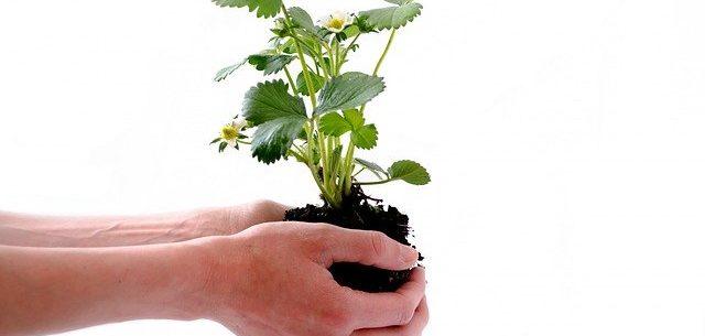 10 formas de reducir nuestra huella de carbono